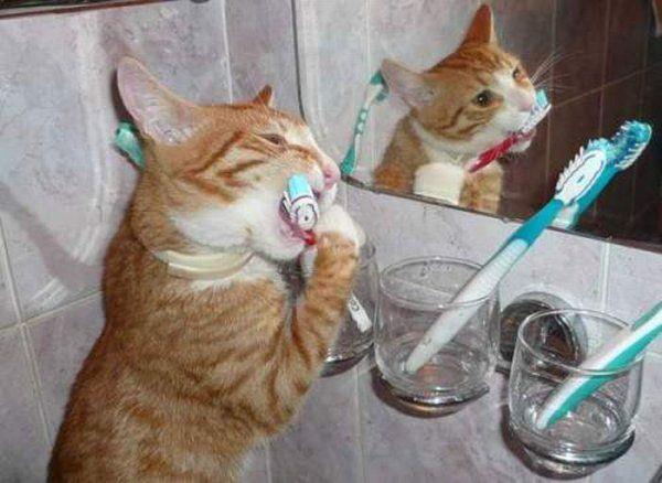 Téma dne: kočka. jsou kočky hloupější než psi?