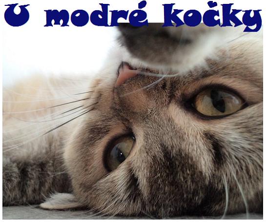 U modré kočky, foto Renata Petříčková