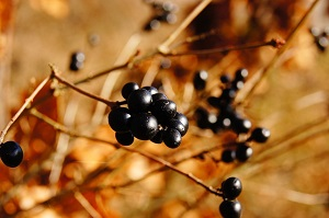 podzimni-plody-free-image-pixabay