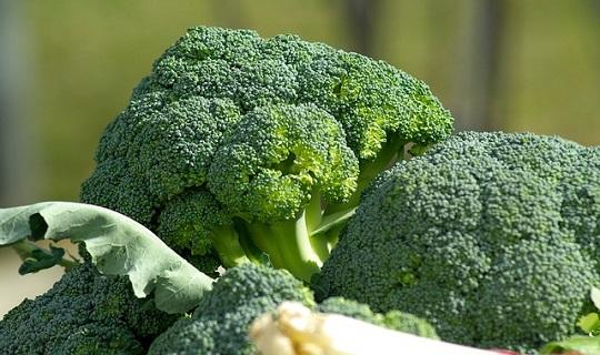brokolice-free-image-pixabay