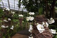 Výstava orchidejí náhled