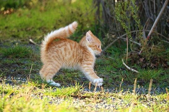 zrzavé kotě