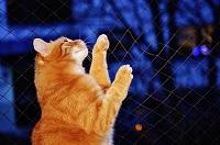 kočka v noci
