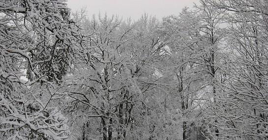 zima sníh
