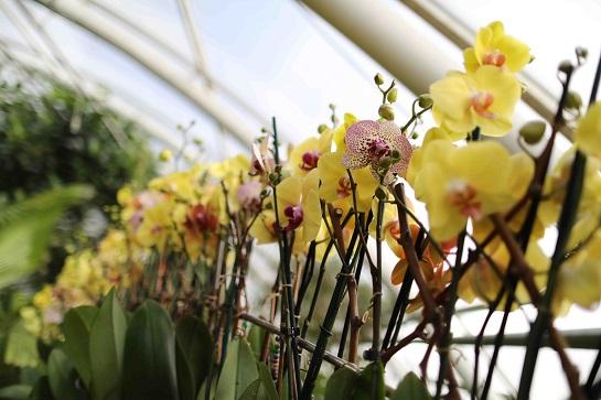 výstava orchidejí 2017