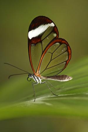 Výstava motýlů - Greta oto