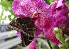 Výstava motýlů náhled