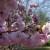 Jaro v trojské botanické zahradě náhled