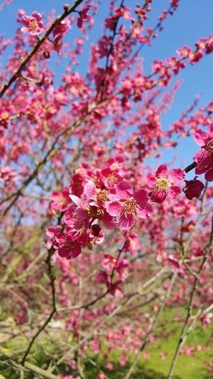 Jaro v trojské botanické zahradě 2
