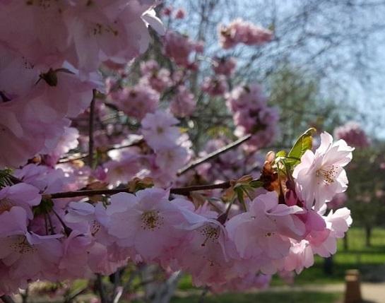 Jaro v trojské botanické zahradě