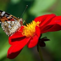 květen free picture pixabay
