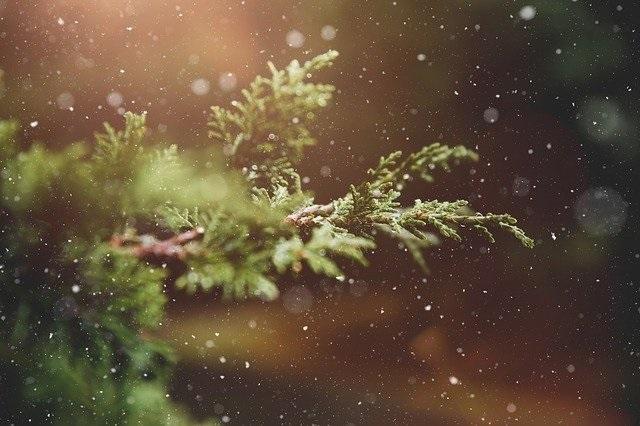 advent, pixabay.com