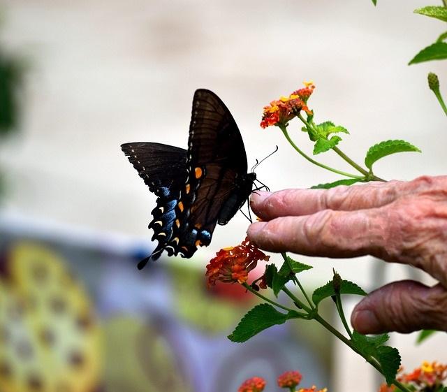 Motýl a stáří, obrázek pixabay